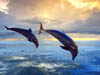 "Interactive program with Dolphins ""Dolphinaris"" Tours"