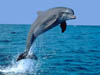 Punta Sur Ecological Park