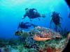 Cozumel Certified Scuba Diving
