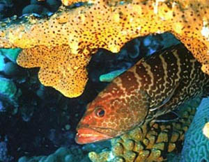Buceo en Isla Cozumel