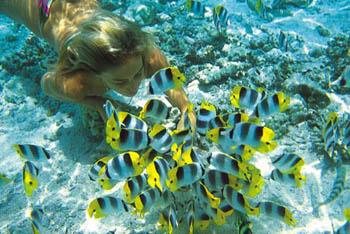Practica Snorkel en Isla Cozumel
