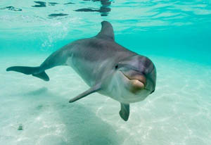 Encuentro con Delfines en Puerto Aventuras