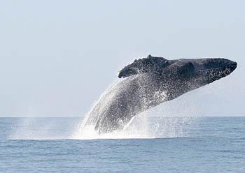 Safari en el Mar en Puerto Vallarta