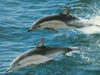 Swimming with dolphins Tours