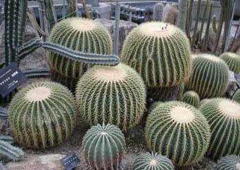 Parques y Jardines en San José del Cabo