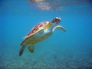Turismo de eco-Aventura en Tulum