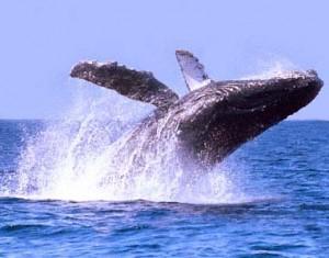 Los Cabos, avistamiento de ballenas
