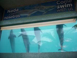 en cancun interactive aquarium