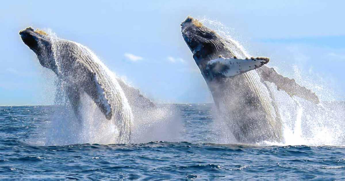 Avistamiento de ballenas en Cabo San Lucas