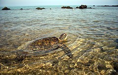 turtle-farm-isla-mujeres.jpg